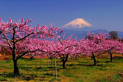 Monte Fuji Japan National Tourism Organization
