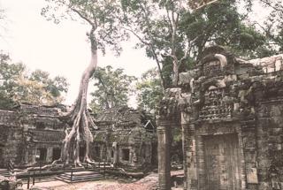 Ta Prohm, Siem Reap
